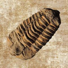Fossielen en mineralen